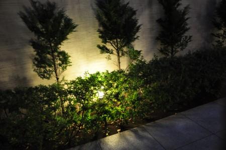 光と緑の調和